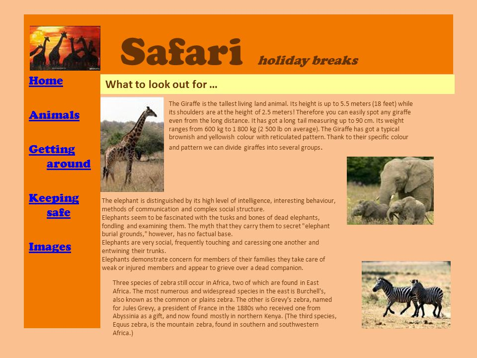 Safari holiday breaks Home Animals Getting around Keeping safe Images What to look out for … The Giraffe is the tallest living land animal. Its height
