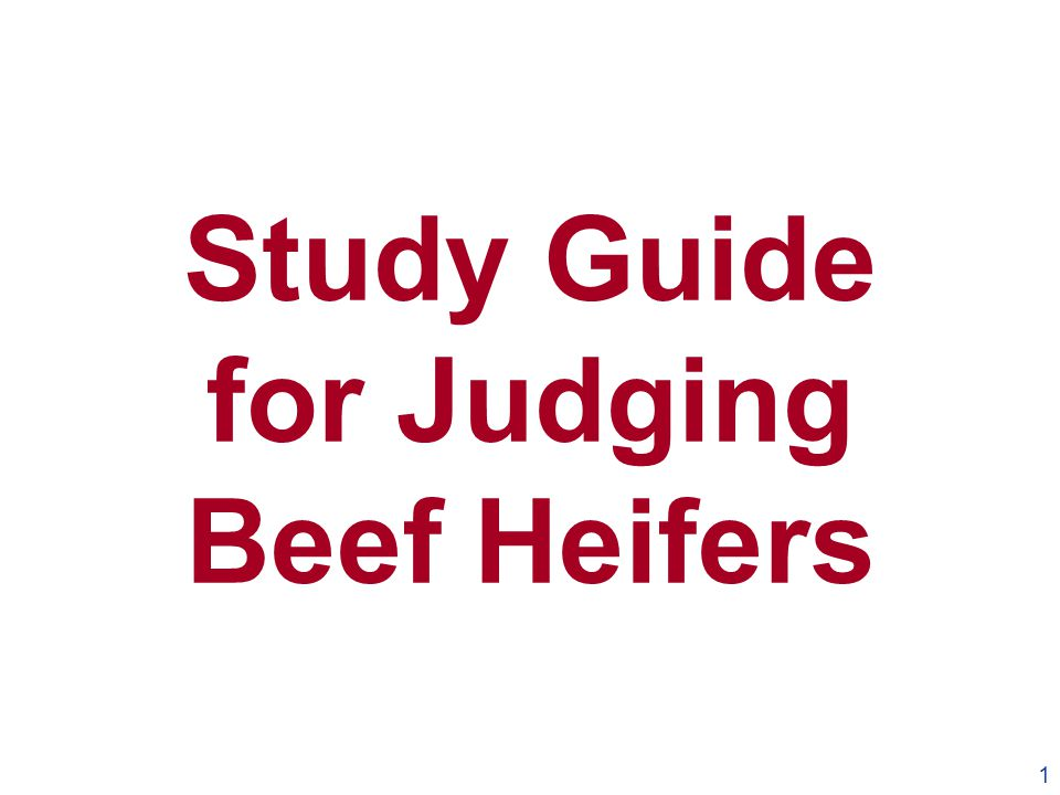 Study Guide for Judging Beef Heifers 1