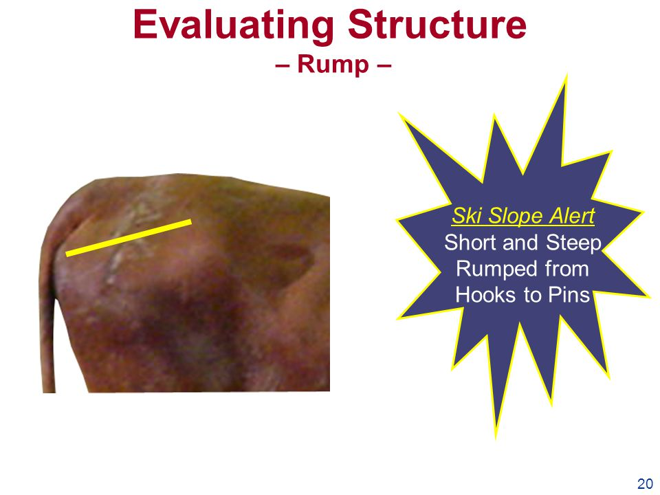 20 Evaluating Structure – Rump – Ski Slope Alert Short and Steep Rumped from Hooks to Pins