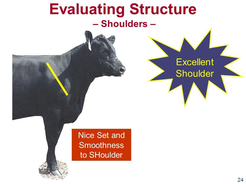 24 Evaluating Structure – Shoulders – Excellent Shoulder Nice Set and Smoothness to SHoulder