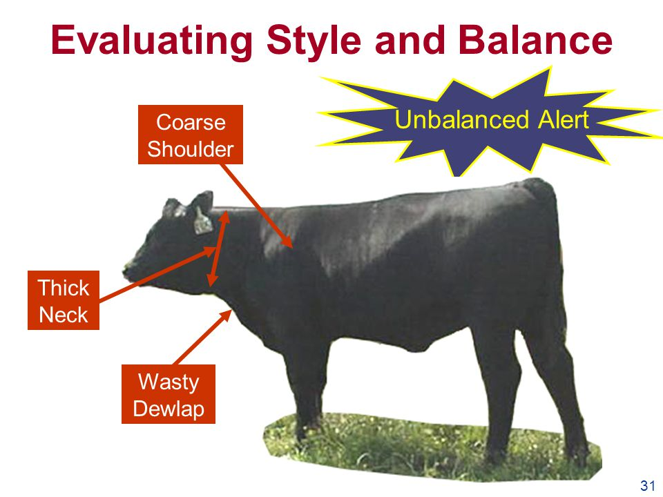 31 Evaluating Style and Balance Unbalanced Alert Coarse Shoulder Thick Neck Wasty Dewlap