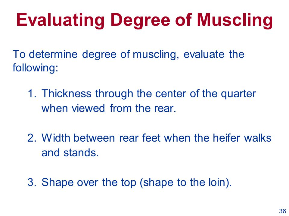 36 Evaluating Degree of Muscling To determine degree of muscling, evaluate the following: 1.Thickness through the center of the quarter when viewed fr