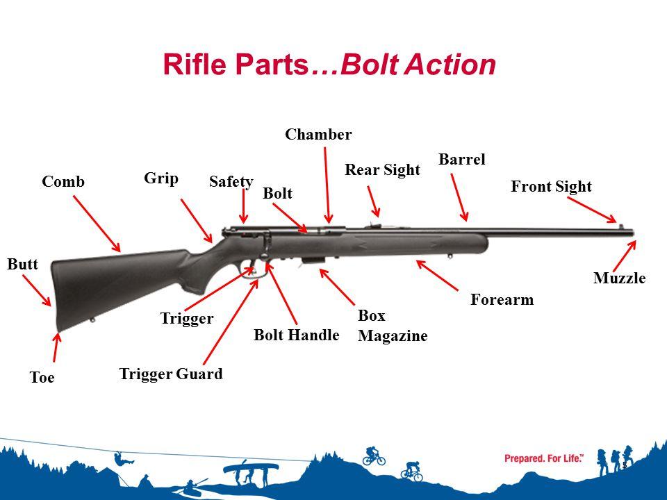 5 Rifle Parts…Bolt Action Grip Butt Toe Comb Chamber Rear Sight Barrel Front Sight Muzzle Forearm Box Magazine Safety Trigger Guard Trigger Bolt Bolt