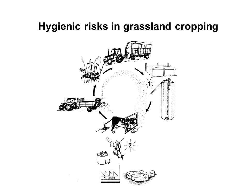 Hygienic risks in grassland cropping