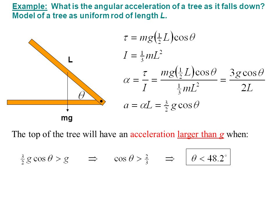 Example: What is the angular acceleration of a tree as it falls down.
