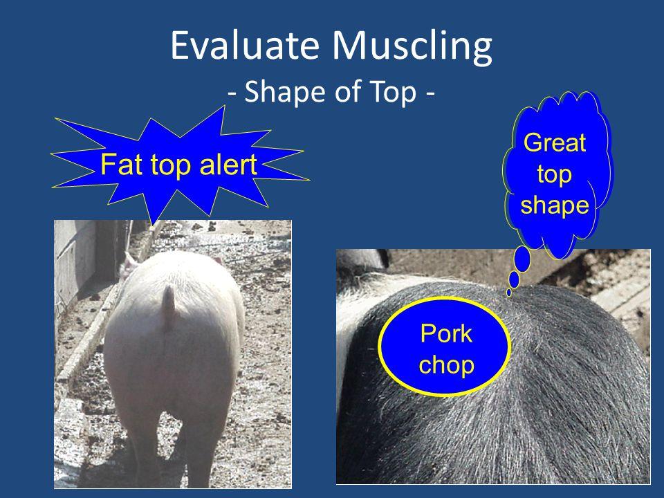 Evaluate Muscling - Shape of Top - Fat top alert Great top shape Pork chop