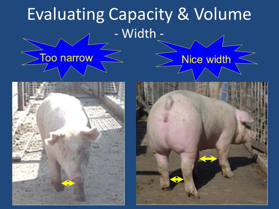 Evaluating Capacity & Volume - Width - Too narrow Nice width
