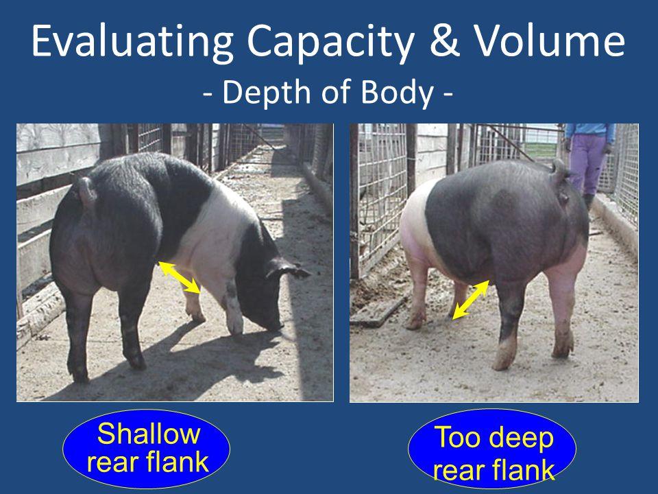 Evaluating Capacity & Volume - Depth of Body - Shallow rear flank Too deep rear flank