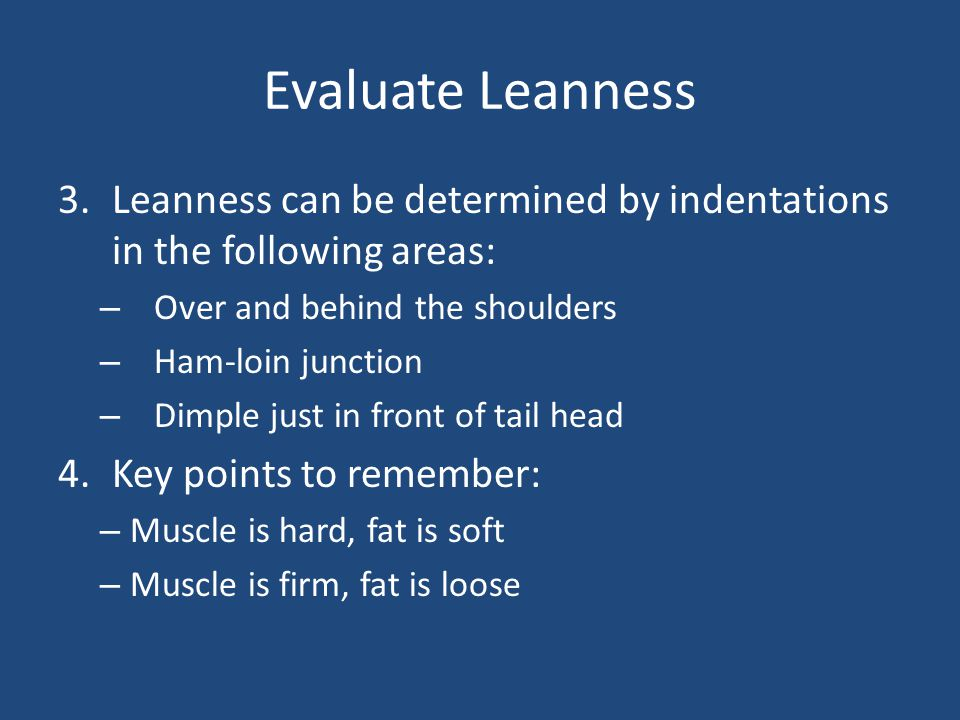 Evaluate Leanness 3.Leanness can be determined by indentations in the following areas: – Over and behind the shoulders – Ham-loin junction – Dimple ju