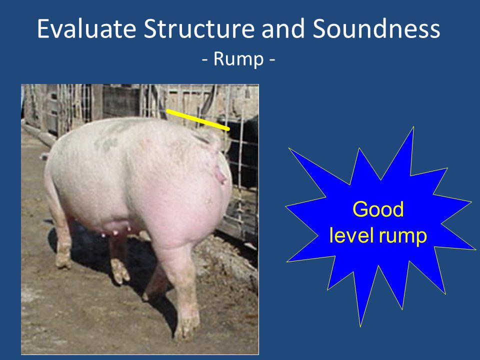 Evaluate Structure and Soundness - Rump - Good level rump