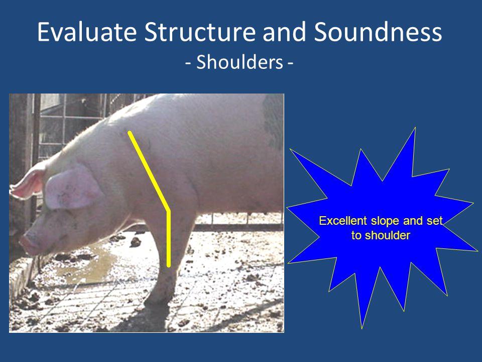 Evaluate Structure and Soundness - Shoulders - Excellent slope and set to shoulder
