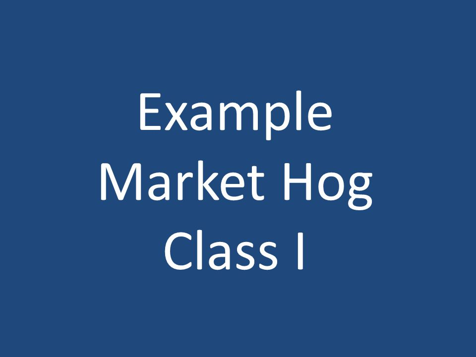 Example Market Hog Class I