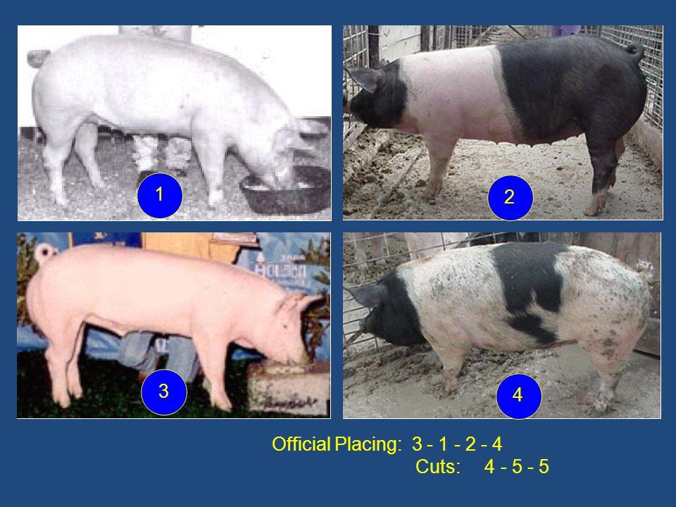 1 2 3 4 Official Placing: 3 - 1 - 2 - 4 Cuts: 4 - 5 - 5