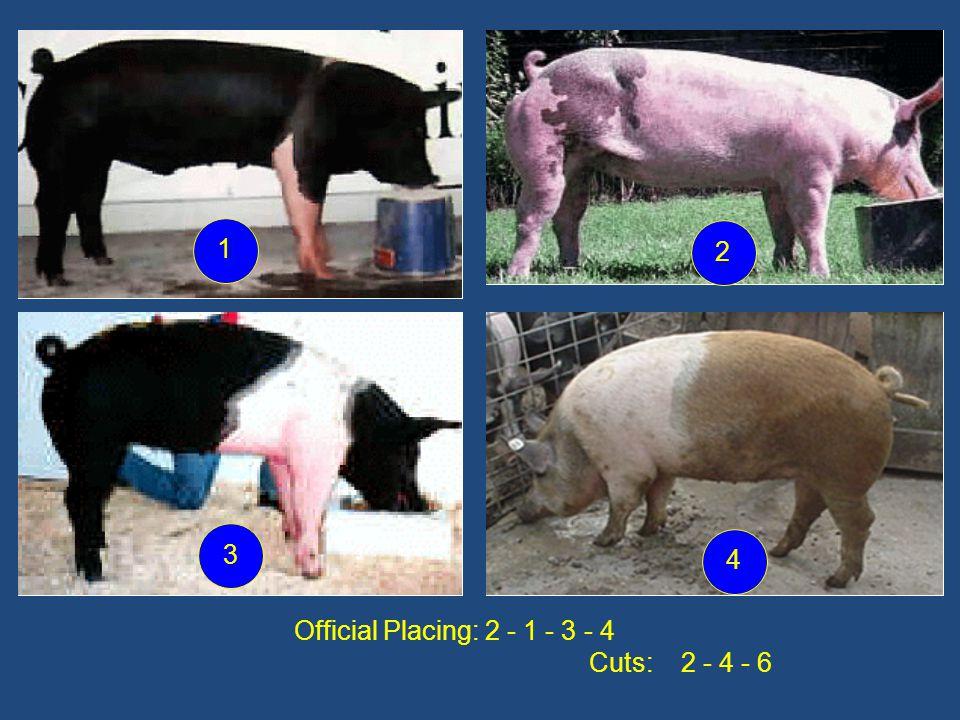Official Placing: 2 - 1 - 3 - 4 Cuts: 2 - 4 - 6 1 2 3 4