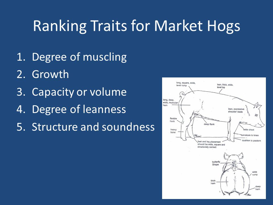 Ranking Traits for Market Hogs 1.Degree of muscling 2.Growth 3.Capacity or volume 4.Degree of leanness 5.Structure and soundness