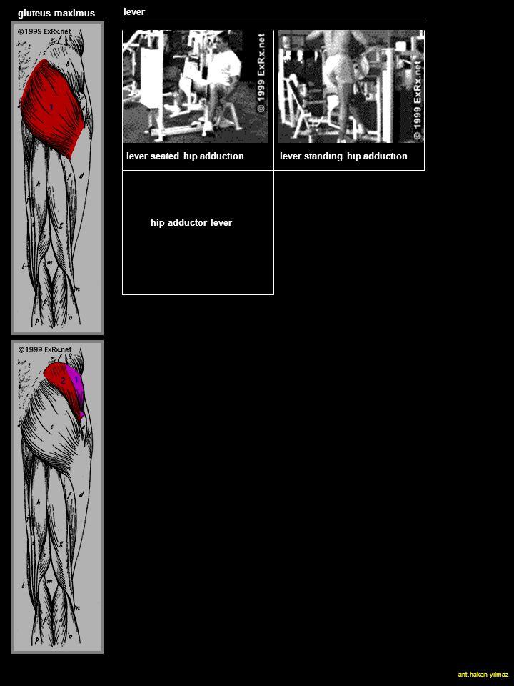 lever SLED HACK SQUAT gluteus maximus hip adductor lever lever seated hıp adductıonlever standıng hıp adductıon ant.hakan yılmaz