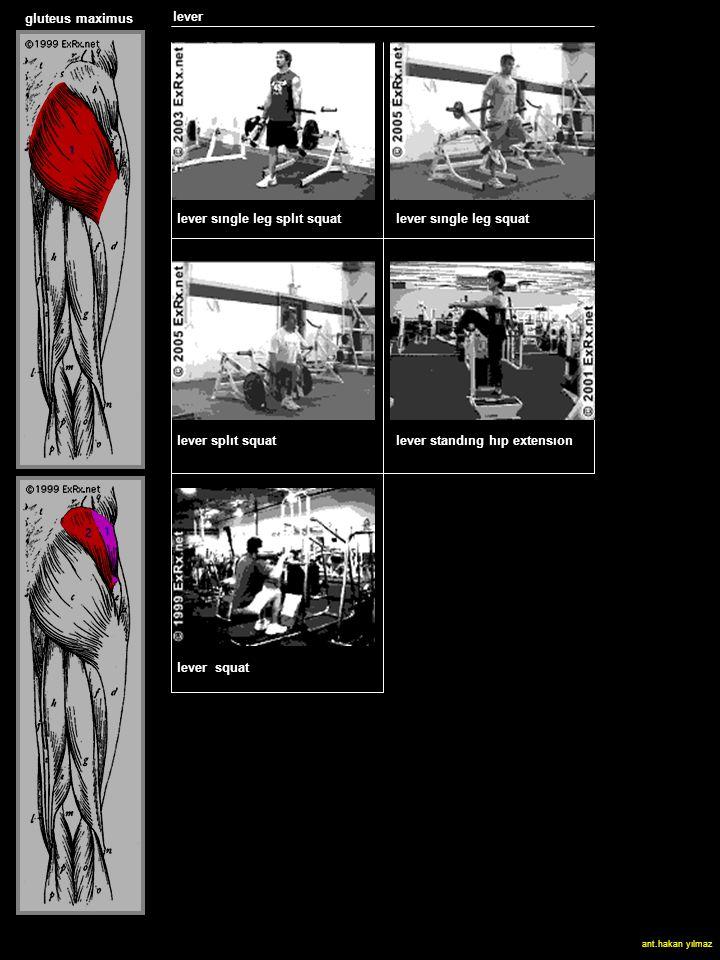 quadriceps lever gluteus maximus lever sıngle leg splıt squat lever sıngle leg squat lever splıt squat lever standıng hıp extensıon lever squat ant.hakan yılmaz