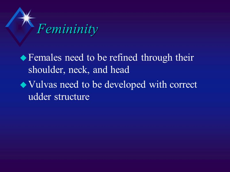 Femininity u Females need to be refined through their shoulder, neck, and head u Vulvas need to be developed with correct udder structure