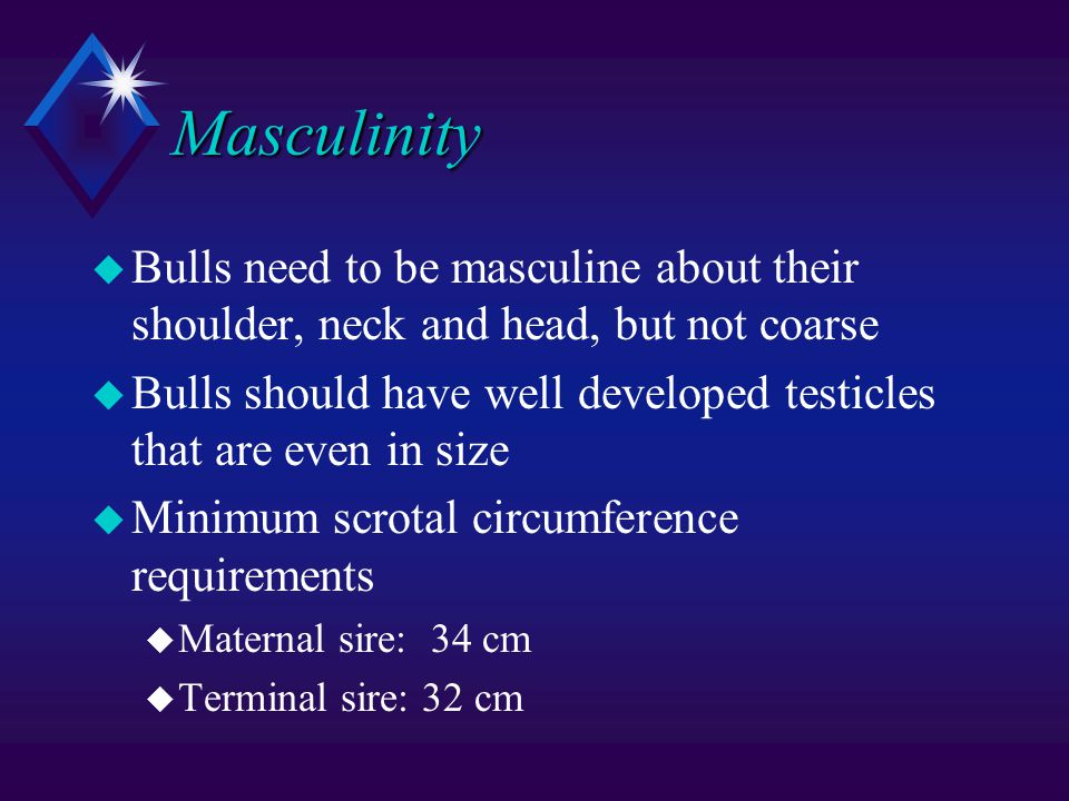 Masculinity u Bulls need to be masculine about their shoulder, neck and head, but not coarse u Bulls should have well developed testicles that are even in size u Minimum scrotal circumference requirements u Maternal sire: 34 cm u Terminal sire: 32 cm