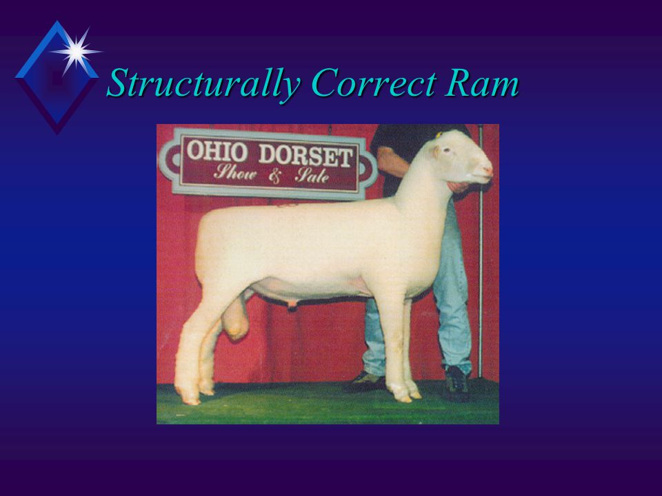 Structurally Correct Ram