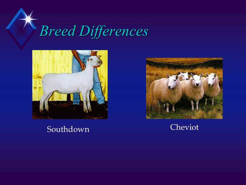 Breed Differences Southdown Cheviot