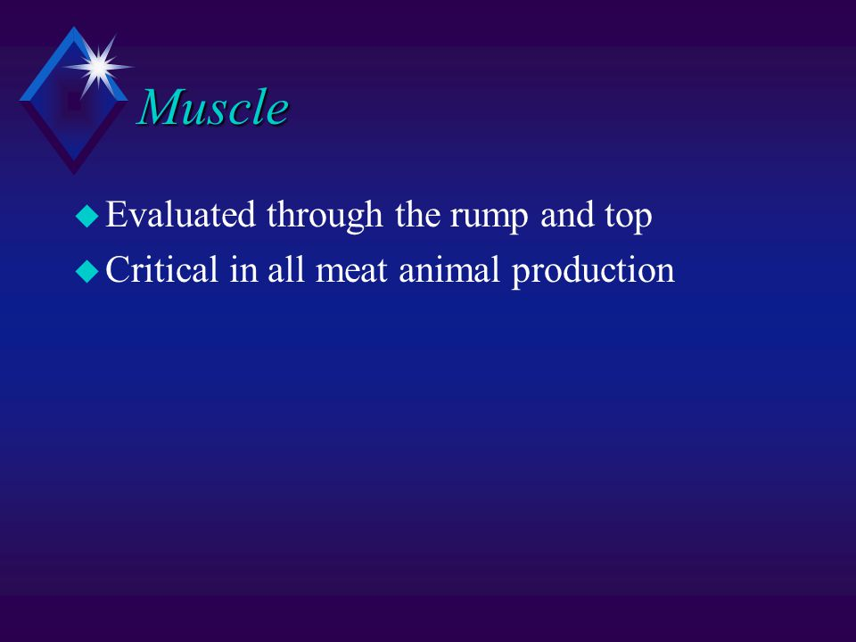 Muscle u Evaluated through the rump and top u Critical in all meat animal production