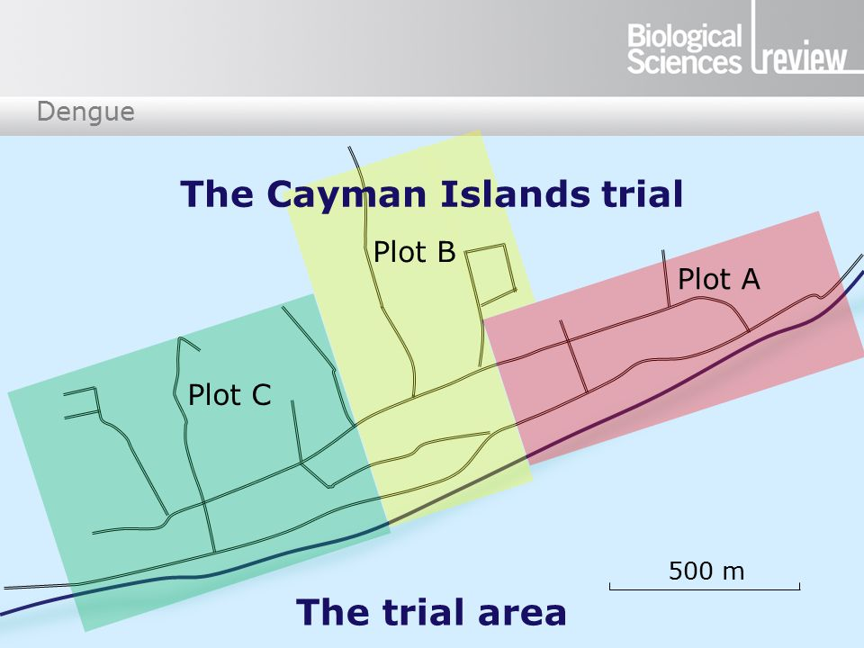 Dengue 500 m Plot A Plot B Plot C The trial area The Cayman Islands trial