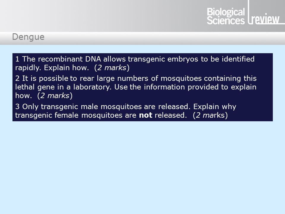 Dengue 1 The recombinant DNA allows transgenic embryos to be identified rapidly.
