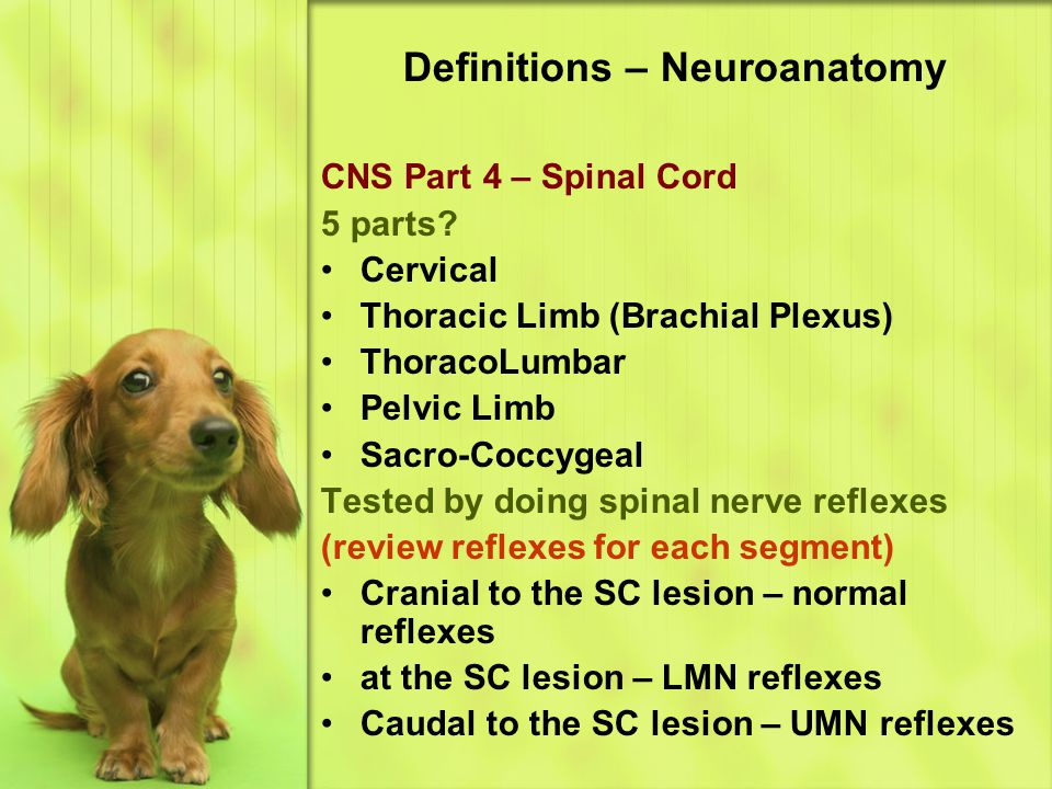 Definitions – Neuroanatomy CNS Part 4 – Spinal Cord 5 parts.