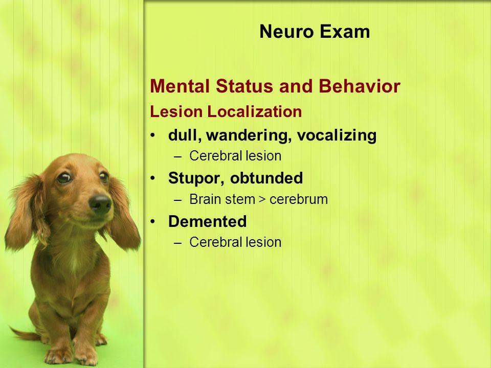 Neuro Exam Mental Status and Behavior Lesion Localization dull, wandering, vocalizing –Cerebral lesion Stupor, obtunded –Brain stem > cerebrum Demented –Cerebral lesion