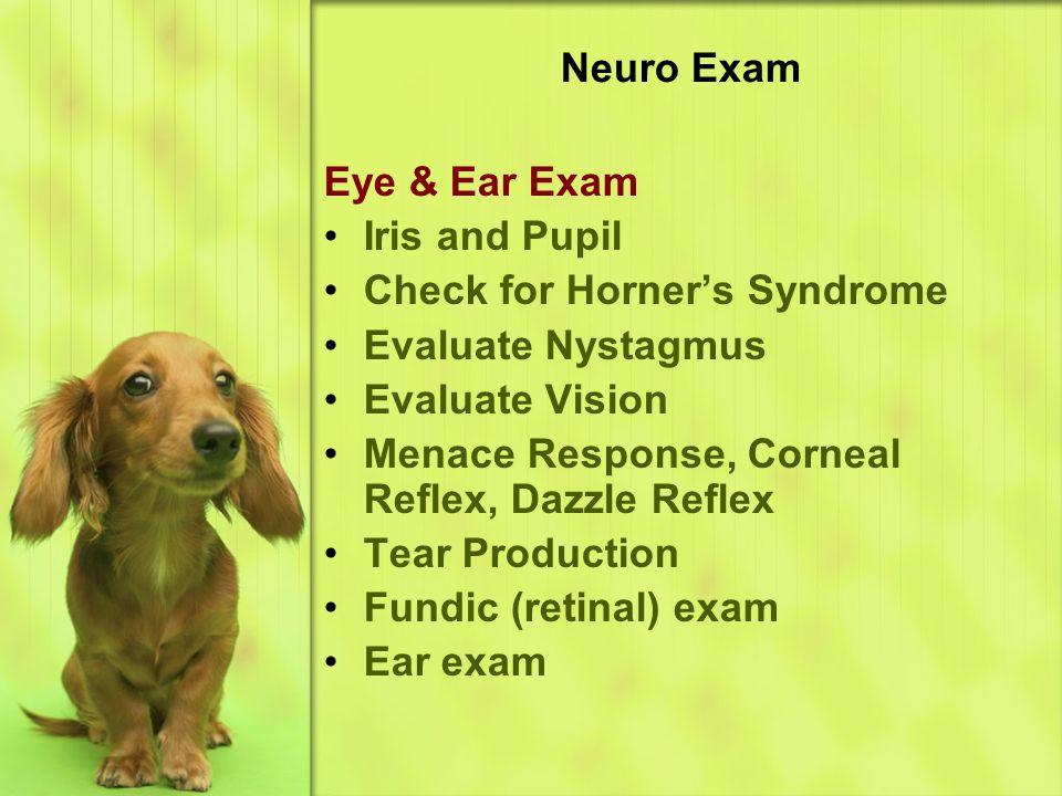 Neuro Exam Eye & Ear Exam Iris and Pupil Check for Horner's Syndrome Evaluate Nystagmus Evaluate Vision Menace Response, Corneal Reflex, Dazzle Reflex Tear Production Fundic (retinal) exam Ear exam