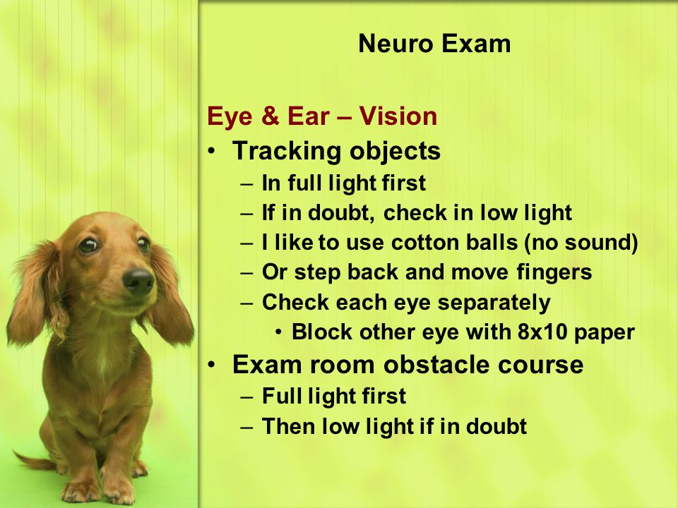 Neuro Exam Eye & Ear – Vision Tracking objects –In full light first –If in doubt, check in low light –I like to use cotton balls (no sound) –Or step back and move fingers –Check each eye separately Block other eye with 8x10 paper Exam room obstacle course –Full light first –Then low light if in doubt