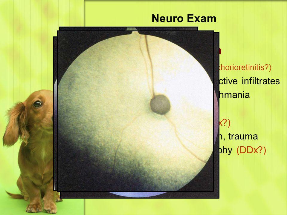 Neuro Exam Eye & Ear – Fundic Exam Retina & Tapetum (DDx chorioretinitis?) –Chorioretinitis – hyporeflective infiltrates Fungal, FIP, LSA, Leishmania –Medallion lesions – CDV –Retinal detachments (DDx?) Hemorrhage, infiltration, trauma –Retinal degeneration/atrophy (DDx?) Old SARDs PRA
