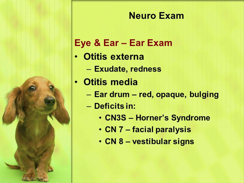 Neuro Exam Eye & Ear – Ear Exam Otitis externa –Exudate, redness Otitis media –Ear drum – red, opaque, bulging –Deficits in: CN3S – Horner's Syndrome CN 7 – facial paralysis CN 8 – vestibular signs