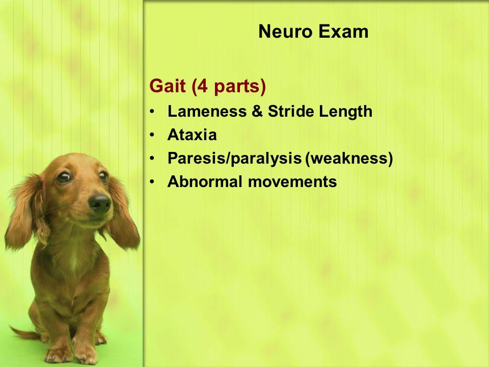 Neuro Exam Gait (4 parts) Lameness & Stride Length Ataxia Paresis/paralysis (weakness) Abnormal movements