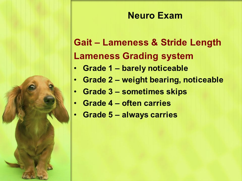 Neuro Exam Gait – Lameness & Stride Length Lameness Grading system Grade 1 – barely noticeable Grade 2 – weight bearing, noticeable Grade 3 – sometimes skips Grade 4 – often carries Grade 5 – always carries