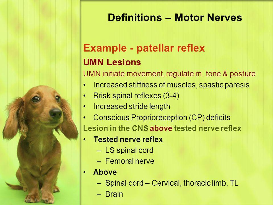 Definitions – Motor Nerves Example - patellar reflex UMN Lesions UMN initiate movement, regulate m.