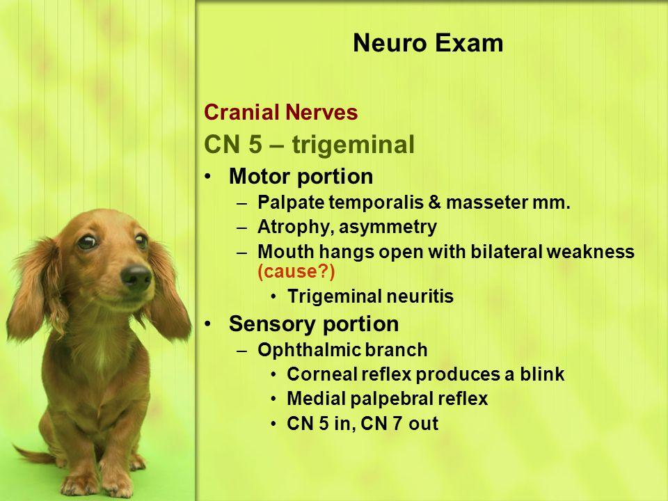 Neuro Exam Cranial Nerves CN 5 – trigeminal Motor portion –Palpate temporalis & masseter mm.