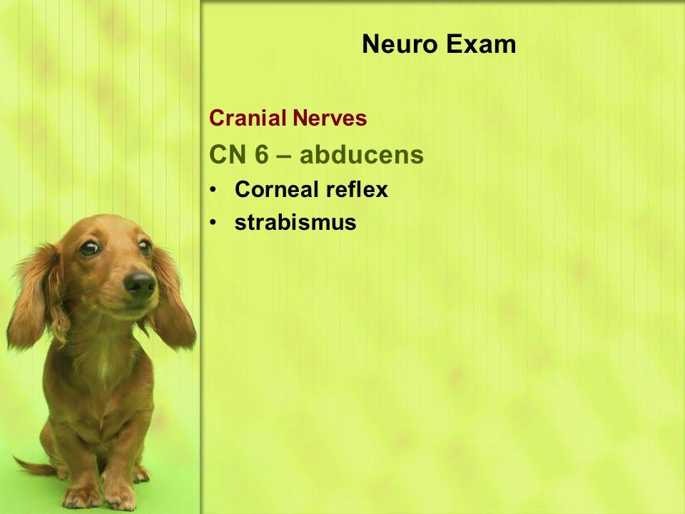 Neuro Exam Cranial Nerves CN 6 – abducens Corneal reflex strabismus