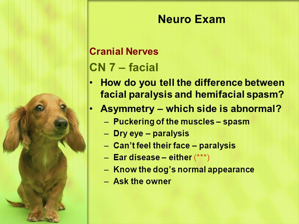 Neuro Exam Cranial Nerves CN 7 – facial How do you tell the difference between facial paralysis and hemifacial spasm.