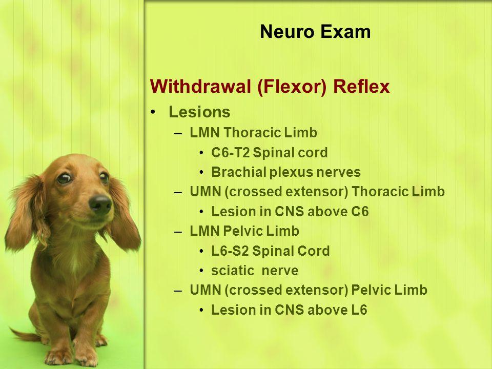 Neuro Exam Withdrawal (Flexor) Reflex Lesions –LMN Thoracic Limb C6-T2 Spinal cord Brachial plexus nerves –UMN (crossed extensor) Thoracic Limb Lesion in CNS above C6 –LMN Pelvic Limb L6-S2 Spinal Cord sciatic nerve –UMN (crossed extensor) Pelvic Limb Lesion in CNS above L6