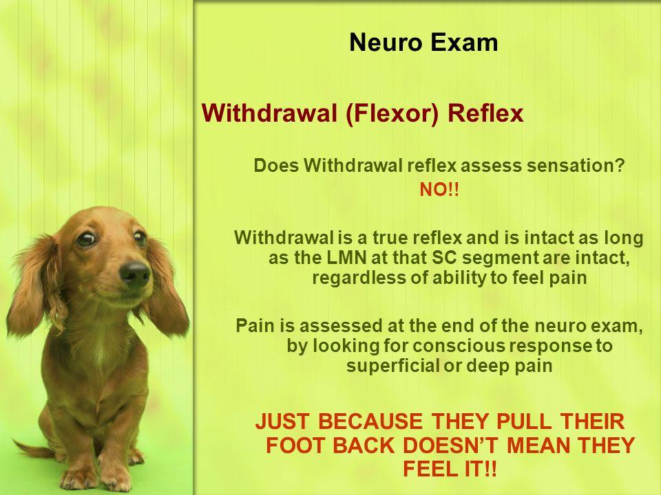 Neuro Exam Withdrawal (Flexor) Reflex Does Withdrawal reflex assess sensation.