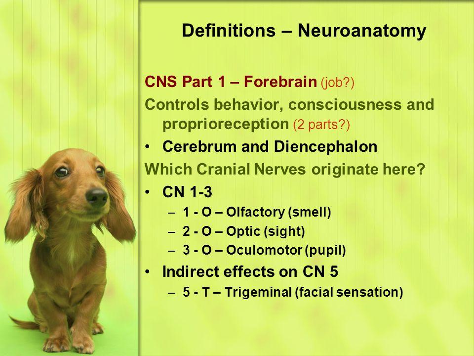 Definitions – Neuroanatomy CNS Part 1 – Forebrain (job?) Controls behavior, consciousness and proprioreception (2 parts?) Cerebrum and Diencephalon Which Cranial Nerves originate here.