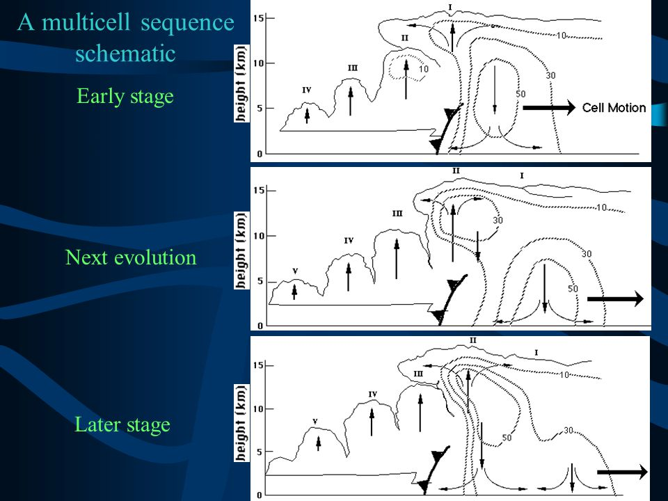 A multicell sequence schematic Early stage Next evolution Later stage