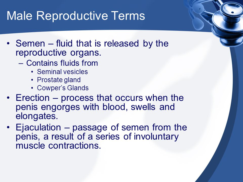 Male Reproductive Terms Semen – fluid that is released by the reproductive organs. –Contains fluids from Seminal vesicles Prostate gland Cowper's Glan