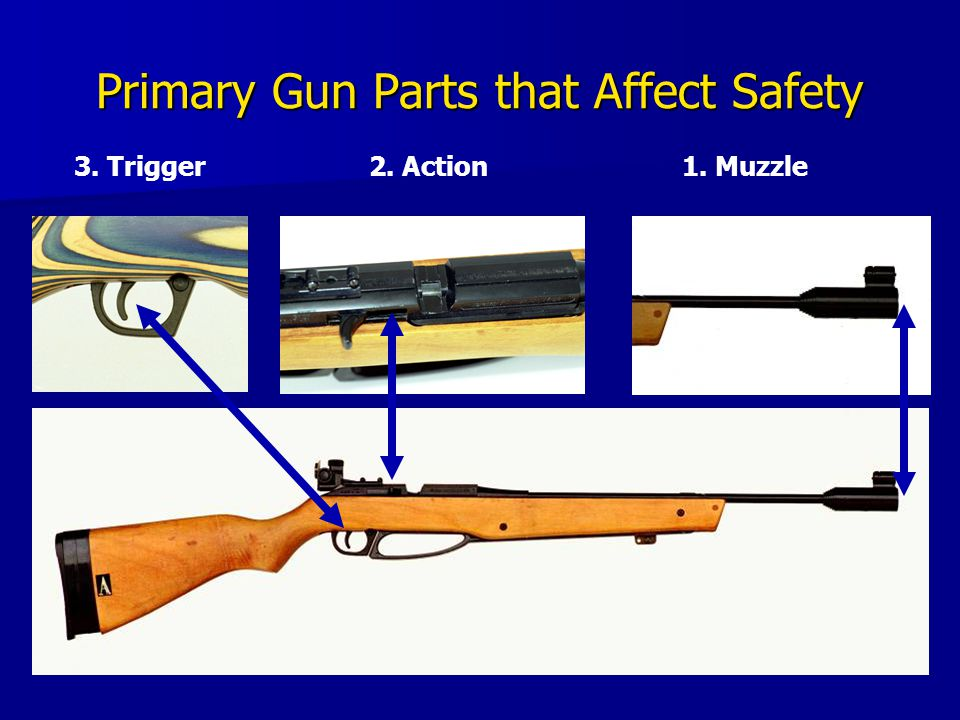 Primary Gun Parts that Affect Safety 3. Trigger2. Action1. Muzzle