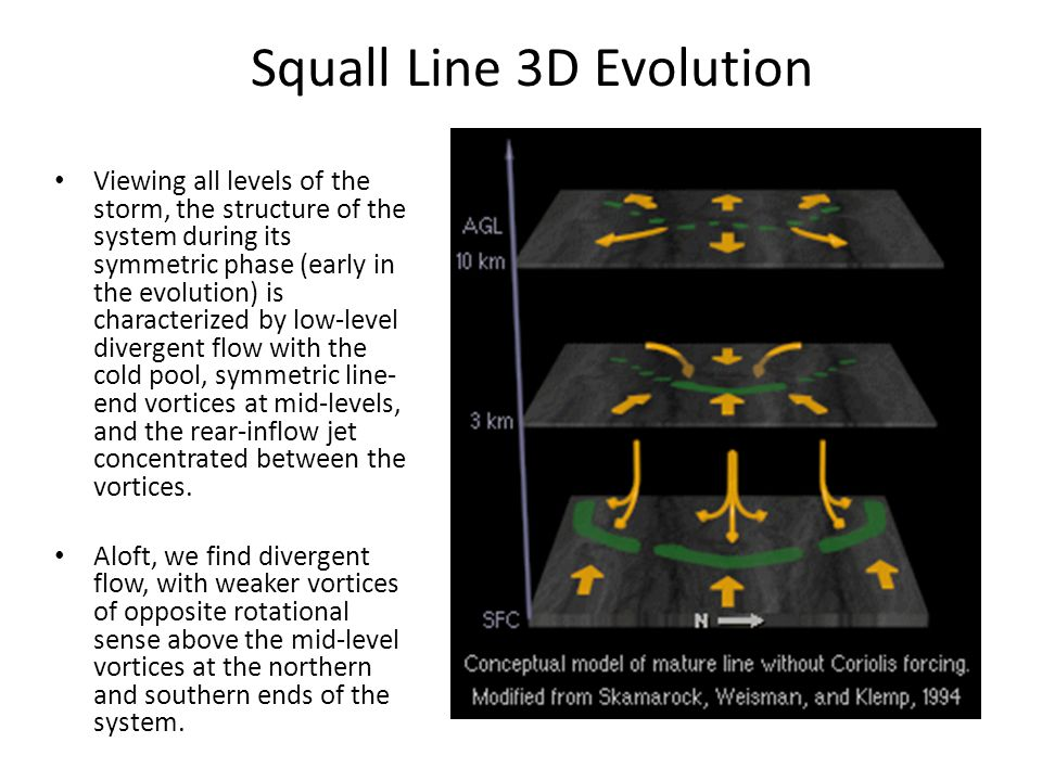 Squall Line 3D Evolution Viewing all levels of the storm, the structure of the system during its symmetric phase (early in the evolution) is character
