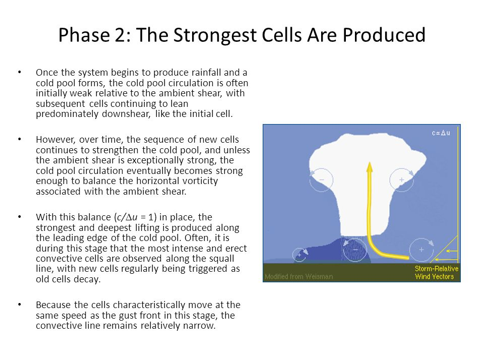 Phase 2: The Strongest Cells Are Produced Once the system begins to produce rainfall and a cold pool forms, the cold pool circulation is often initial