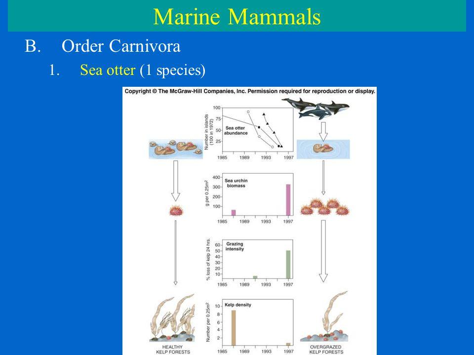 Marine Mammals B.Order Carnivora 1.Sea otter (1 species)