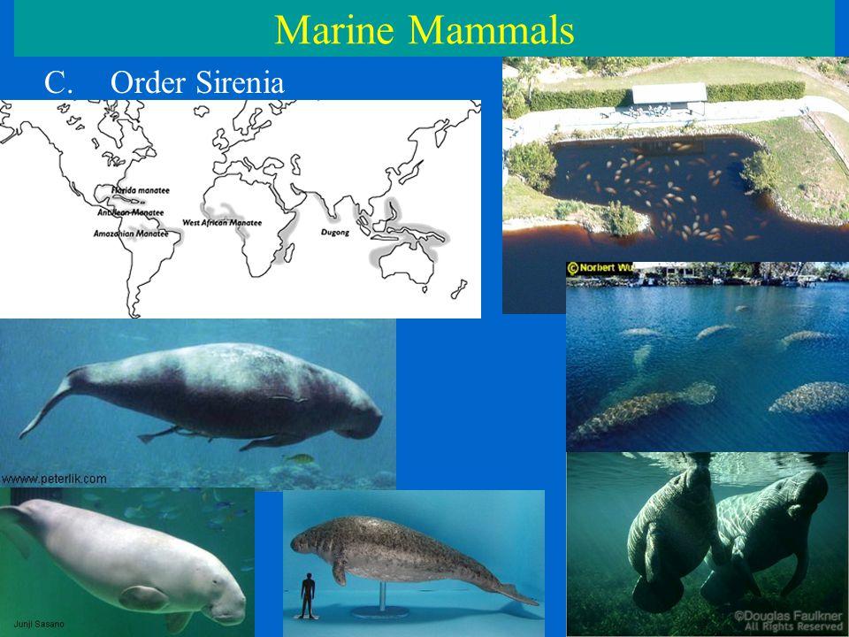 Marine Mammals C.Order Sirenia